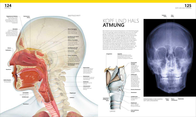 Prof. Dr. Alice Roberts: Anatomie und Physiologie | Malerblatt ...