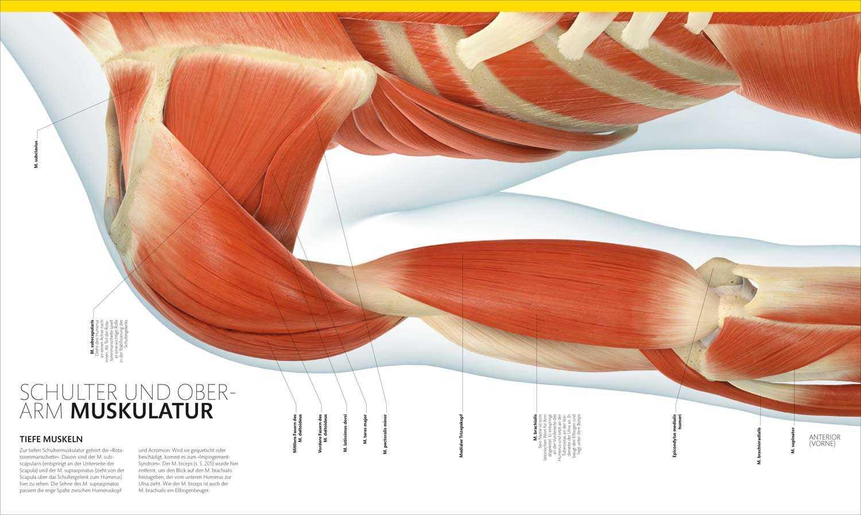Beste Grundlagen Der Anatomie Und Physiologie Martini 10. Ausgabe ...
